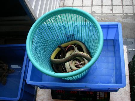 Buying snake.JPG