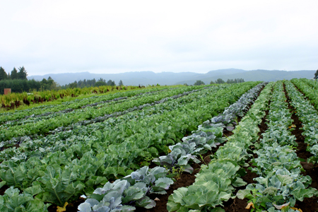 Sauvie island farms1
