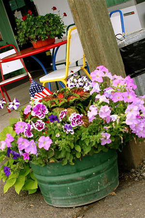 Potted flowers rustic