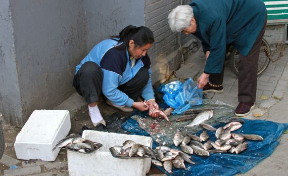 Local fish market china