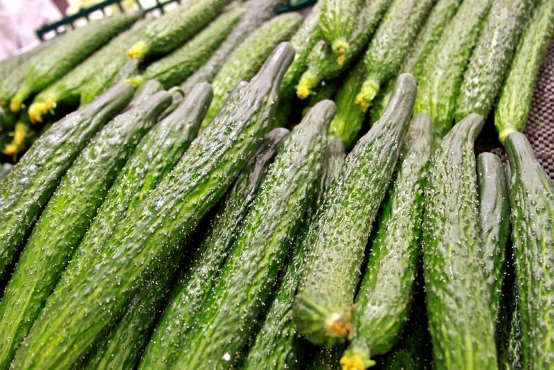 Prickly cucumbers