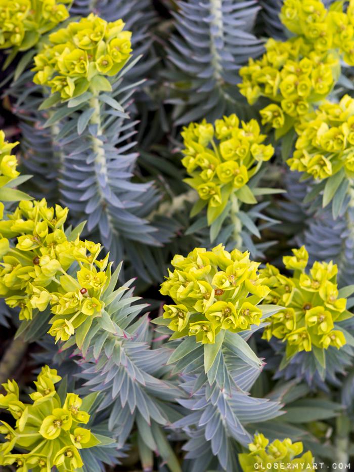 Yellow flowers vancouver wa springtime